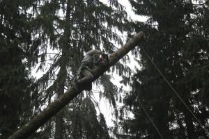Удаление деревьев Ногинский районе