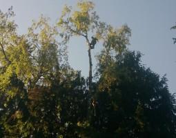 Удаление деревьев в Ленинском районе