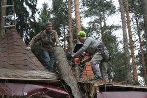 Удаление, спил и вырубка деревьев в Жуковском