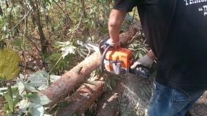 Вырубка деревьев целиком в Раменском