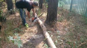 Вырубка деревьев по частям в Быково