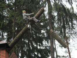 Вырубка деревьев в Ногинском районе