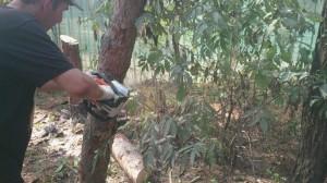 Вырубка деревьев в Раменском районе