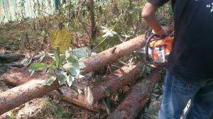 Спил деревьев Раменское