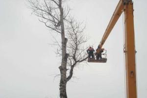 Удаление деревьев при помощи автовышки в Быково
