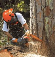 Удаление деревьев целиком с корня в Раменском
