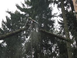 Удаление деревьев в раменском районе