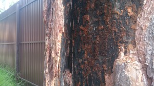 Съеденное дерево короедом