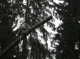 Спил деревьев в домодедовском районе по частям