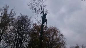 Спил деревьев в Новомосковском альпинисты