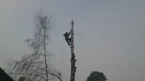 Спил деревьев в Новомосковском по частям