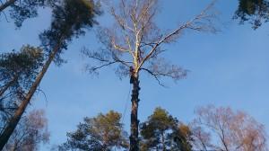Спил деревьев в Новомосковском районе