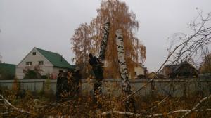 Спил деревьев в домодедовском районе