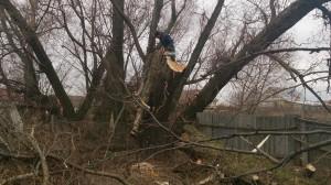 Спил деревьев в домодедовском районе альпинистом