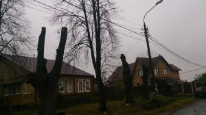 Спил деревьев в наро-фоминском районе