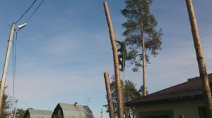 Спил деревьев в наро-фоминском районе по частям