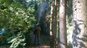 Способы защиты деревьев от жука-короеда