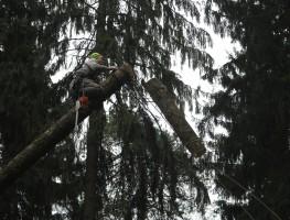 Удаление деревьев в домодедовском районе по частям
