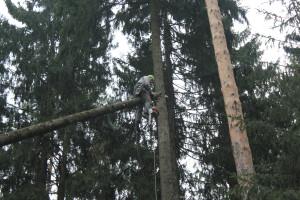 Удаление деревьев в Наро-Фоминском районе