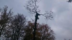 Удаление деревьев в Наро-Фоминском районе специалистами