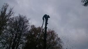 Удаление деревьев в домодедовском районе