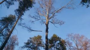 Удаление деревьев в новомосковском районе