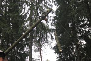 Удаление деревьев в новомосковском районе по частям
