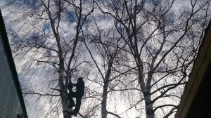 Вырубка деревьев в Норо-фоминском