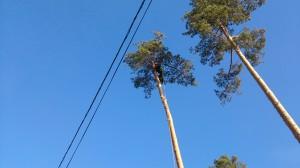 Вырубка деревьев в Норо-Фоминском альпинистом