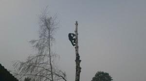 Вырубка деревьев в Норо-фоминском по частям