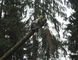 Вырубка деревьев в домодедовском районе по частям