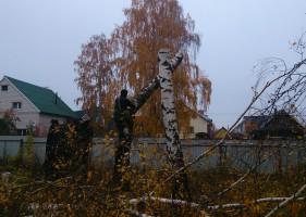 Вырубка деревьев целиком в новой москве