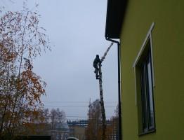 Вырубка деревьев частями в новой москве
