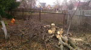 Вырубка деревьев в новой москве