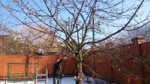 Правильная обрезка яблонь весной на участке
