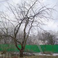 Правильная весенняя обрезка яблонь на участке