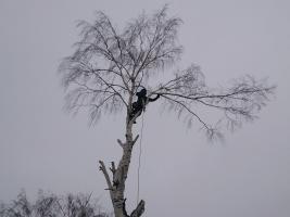 Методика удаления деревьев альпинистами