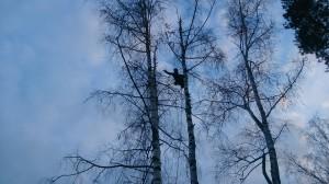 Куда обращаться для того, чтобы спилить дерево на кладбище