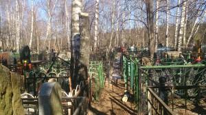 Сколько стоит спилить дерево на кладбище