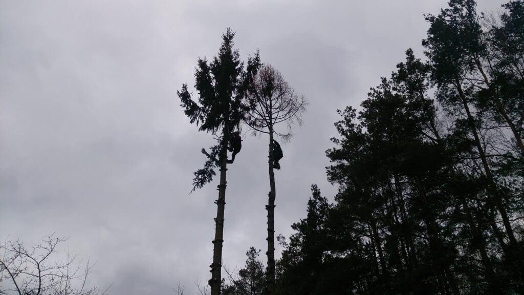 куда жаловаться что спилили дерево под окном Другие интересные события