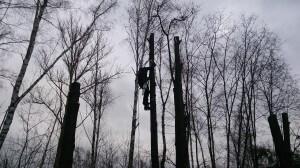 Спилить дерево в Подмосковье