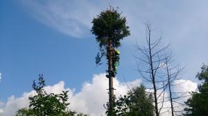 Спиливание деревьев от «Doctor-Forest»