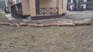 Способы спиливания дерева на даче