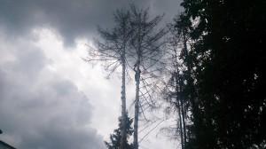 Стоимость работ по спиливанию деревьев