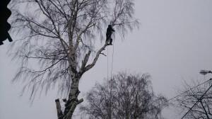 спилить дерево на даче по частям