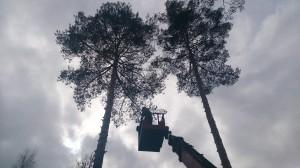 Спилить дерево на участке на вышке
