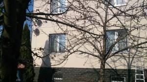 Обрезка плодовых деревьев Мытищинский район