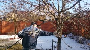 Обрезка плодовых деревьев в Домодедовском районе