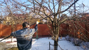 Обрезка плодовых деревьев в Люберецком раяйне