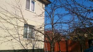 Обрезка плодовых деревьев в Ногинском районе